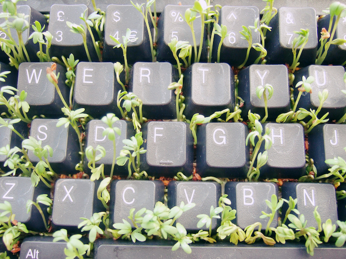 Green sprouts growing through the keys of a computer keyboard.