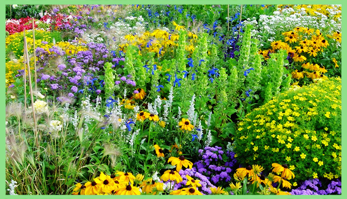 Beautiful field with many flowers of different types, colors and sizes.